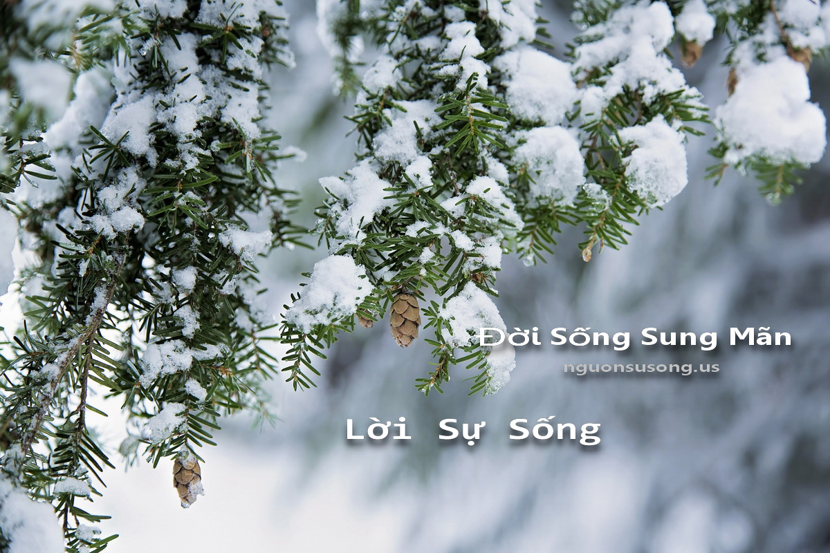 doi song sung man - loi su song
